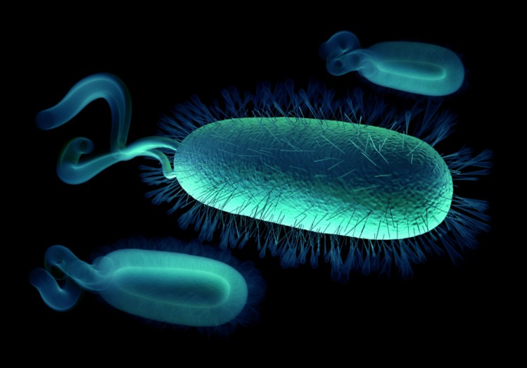 Salmonella and Campylobacter most frequent causes of infection – CDC